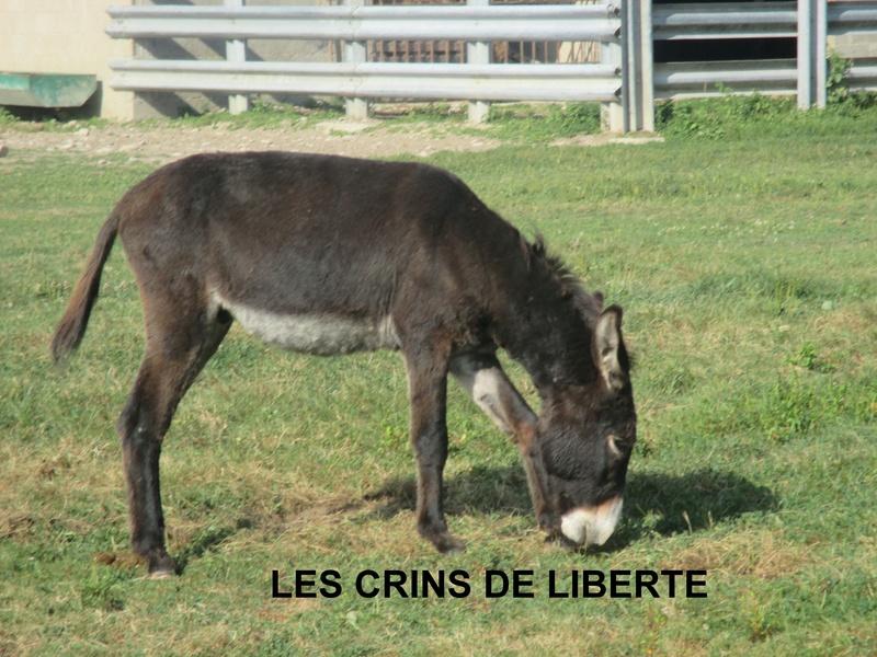 (Dept 71) Fonzy dumarais - ONC âne - Réservé par Christel et Mireille (oct 2017) Img_0710