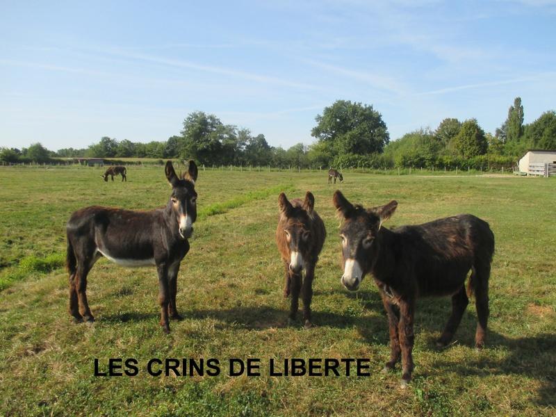 (Dept 71) Fonzy dumarais - ONC âne - Réservé par Christel et Mireille (oct 2017) Img_0713