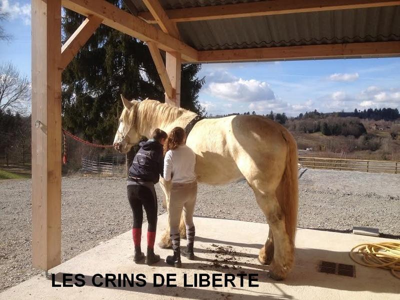 (Dept 19) 14 ans - PIETTE DE COCAN - Percheron PP -partie rejoindre les étoiles  Unname27