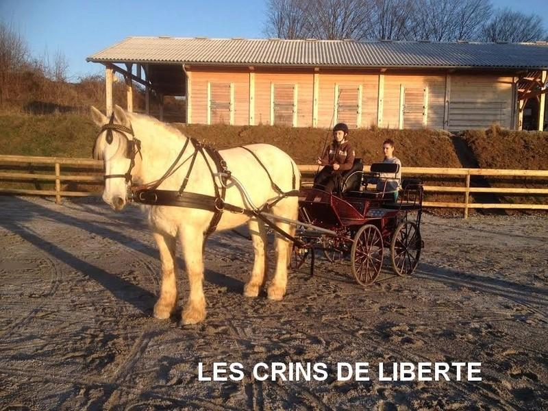 (Dept 19) 14 ans - PIETTE DE COCAN - Percheron PP -partie rejoindre les étoiles  Unname28