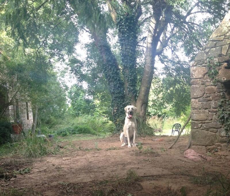 MAIKA, chiot femelle croisée berger d'Anatolie et montagne des pyrénées, 9 mois 20120910