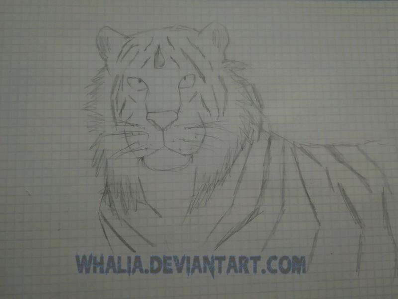 Mi Galería [Whalia] - Página 24 Sketch11
