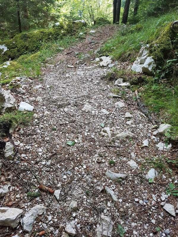 Passeggiata in Trentino 20170810