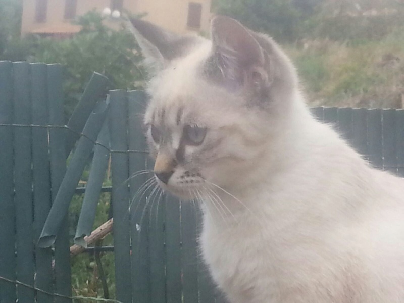 Le temple des chats 20170811