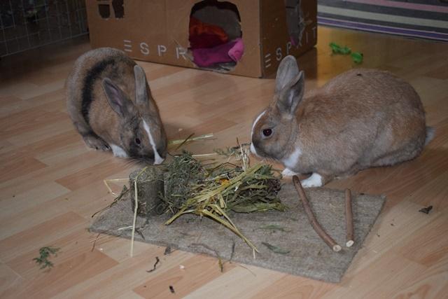 Basile, mâle, lapin, né le 01/06/14  - Page 2 Dsc_0091