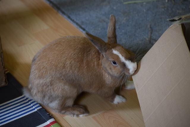 Basile, mâle, lapin, né le 01/06/14  - Page 2 Dsc_0106