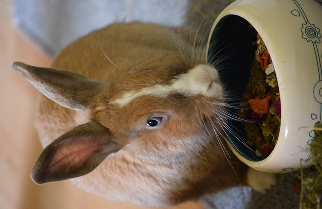 Basile, mâle, lapin, né le 01/06/14  - Page 2 Dsc_0108