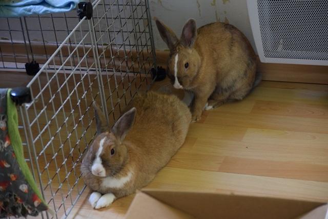 Basile, mâle, lapin, né le 01/06/14  - Page 2 Dsc_0110
