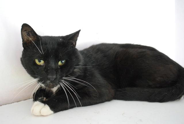 Chaussette, chat noir et blanc Chat_n11