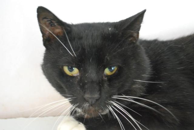 Chaussette, chat noir et blanc Dsc_8612