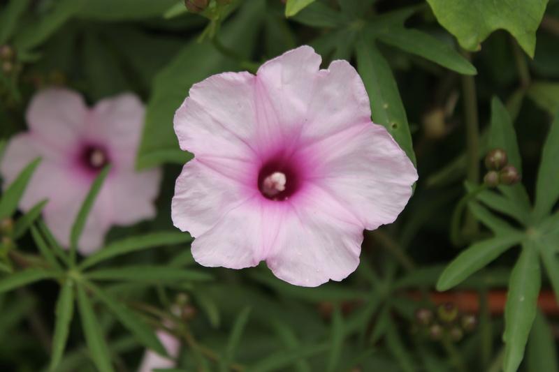 Quelle est cette plante svp Img_4229