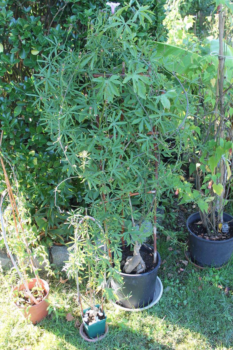 Quelle est cette plante svp Img_4616