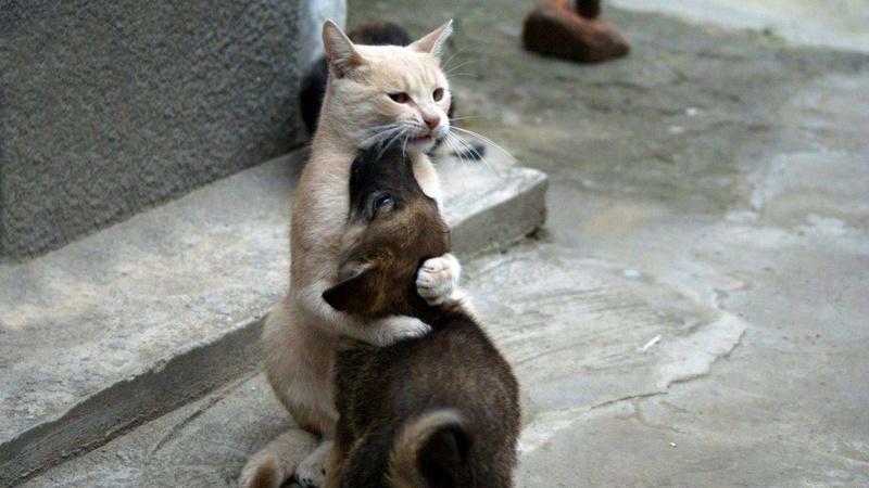 Alerte pour les amoureux des chats - Page 2 Chat-a10