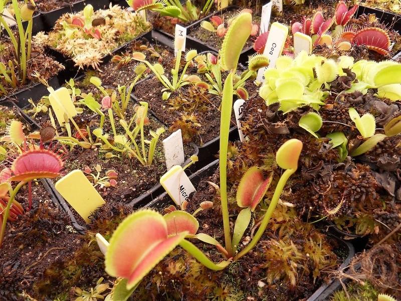 Quelques photo de cultivars Sdc17410