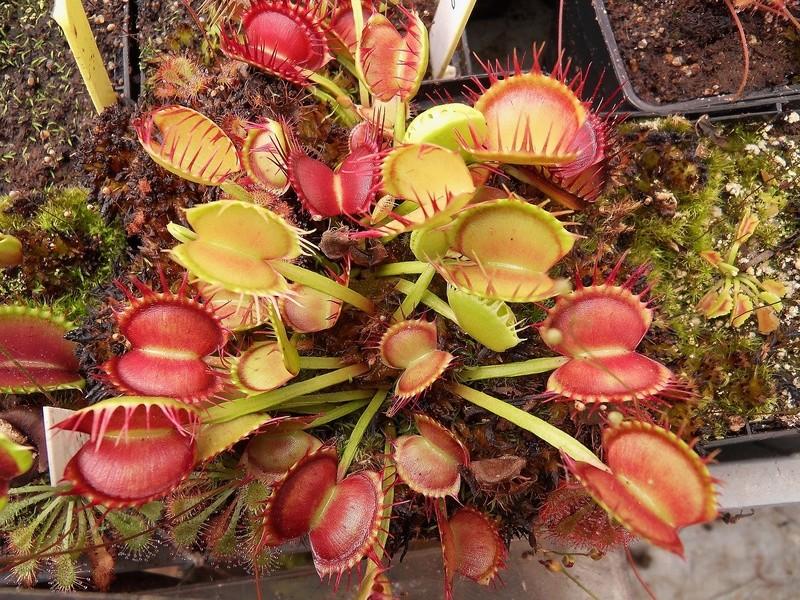 Quelques photo de cultivars Sdc17416