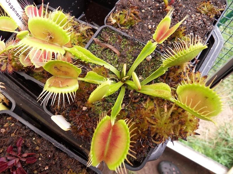 Quelques photo de cultivars Sdc17420