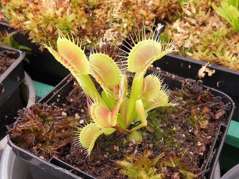 Quelques photo de cultivars Sdc17421