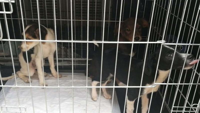 Transfert de 12 + 3 chiens de la fourrière de Piatra Neamt vers Bucarest pour le refuge d'Ellen Recei147