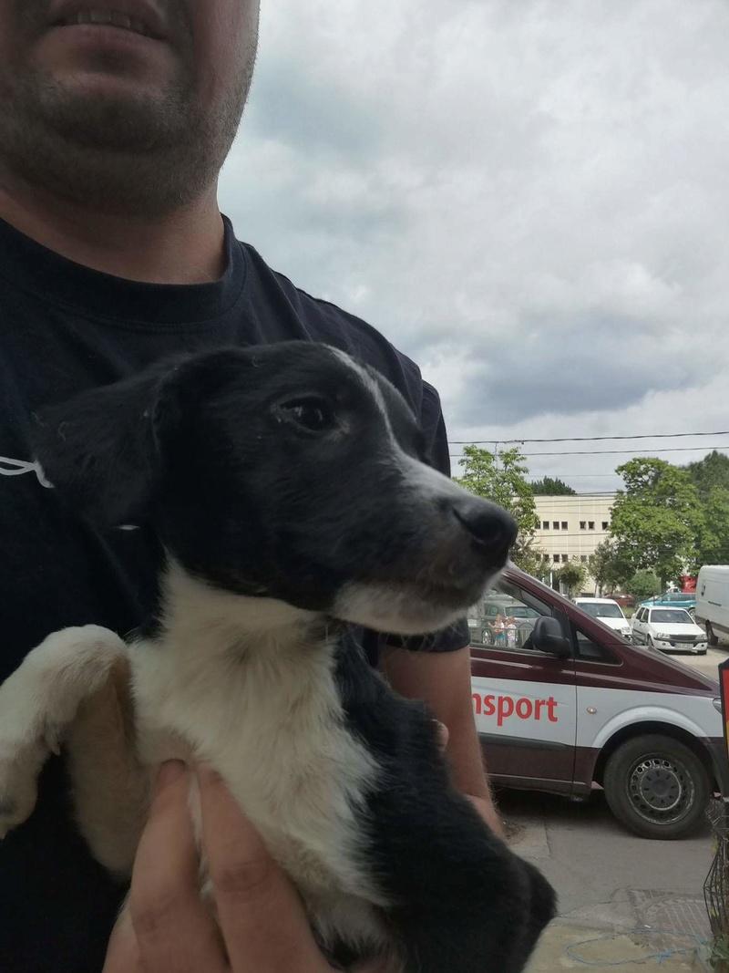 Transfert de 12 + 3 chiens de la fourrière de Piatra Neamt vers Bucarest pour le refuge d'Ellen Recei148