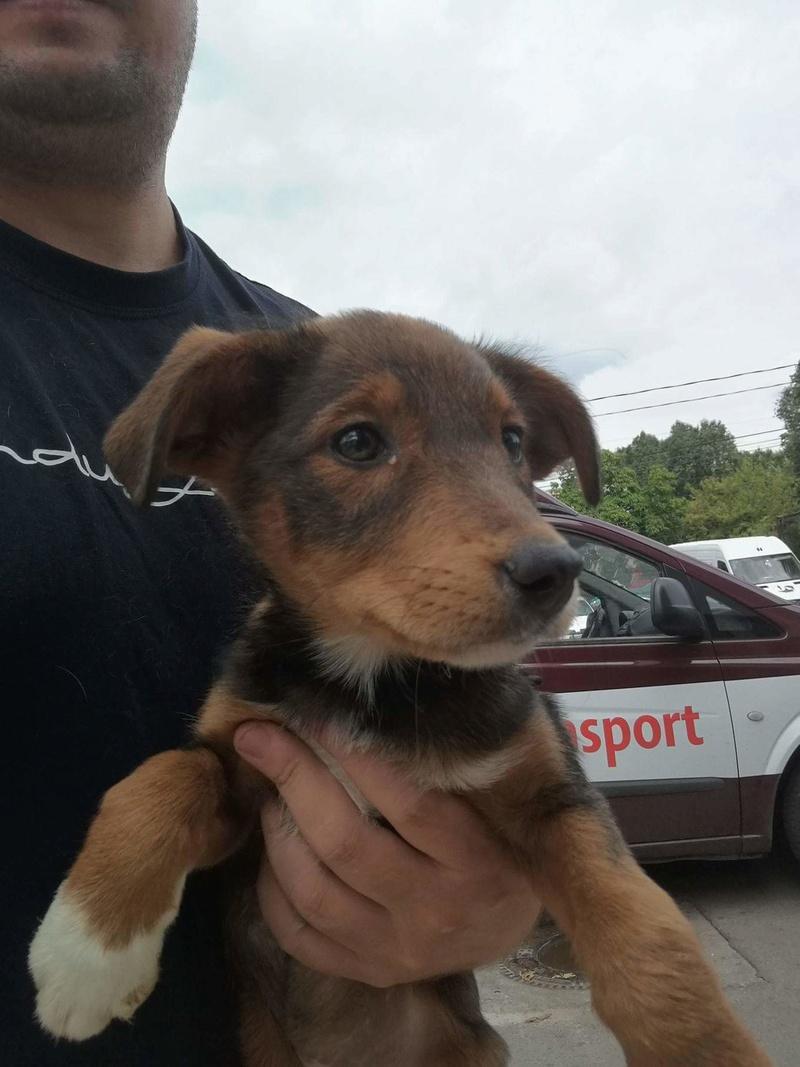 Transfert de 12 + 3 chiens de la fourrière de Piatra Neamt vers Bucarest pour le refuge d'Ellen Recei149