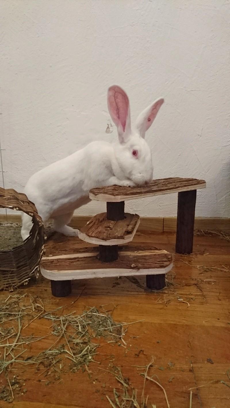 [ADOPTEE] Eden, lapine réhabilitée de laboratoire Edy_2110