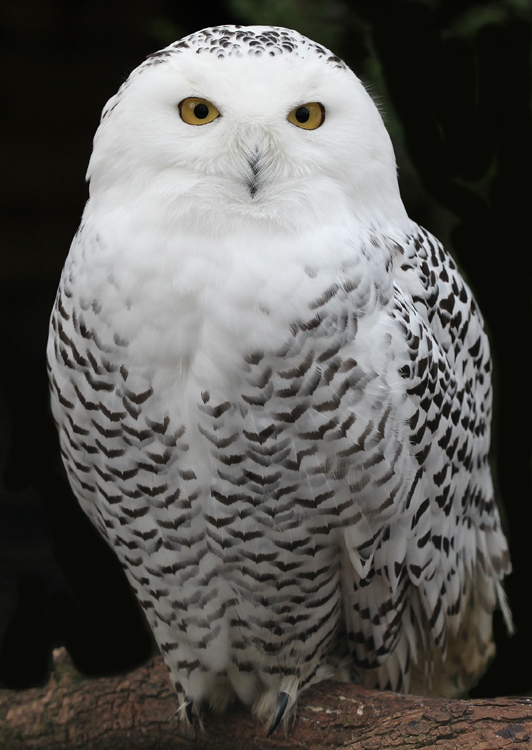 4. Neue Zauberlehrlinge angekommen! Hedwig10