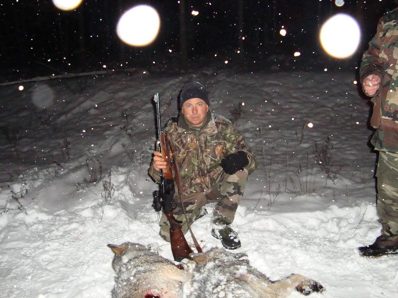 Loups encore ! 03710