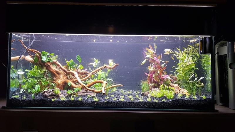 aquarium 100 litres. 20170610