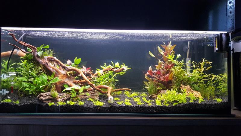 aquarium 100 litres. 20170711