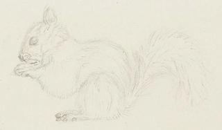 Animal(s) mais non ani'maux - Page 2 15082515