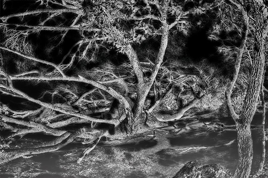 La nuit du ragondin ...  La_nui10