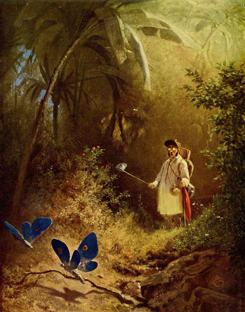 Schmetterlinge und Libellen - Kleine bunte fliegende Juwele Schmet10