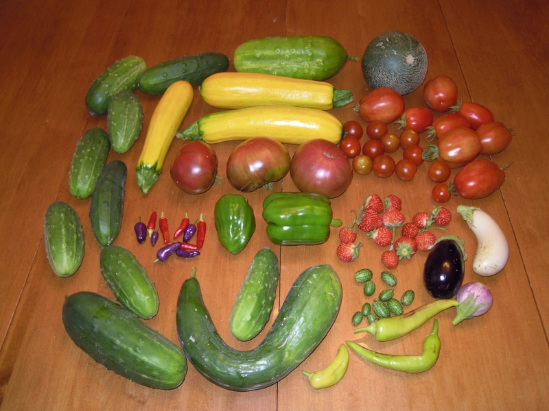 Monthly Avatar: September, Show Off Your Garden Harvest! - Page 3 Dscn0912