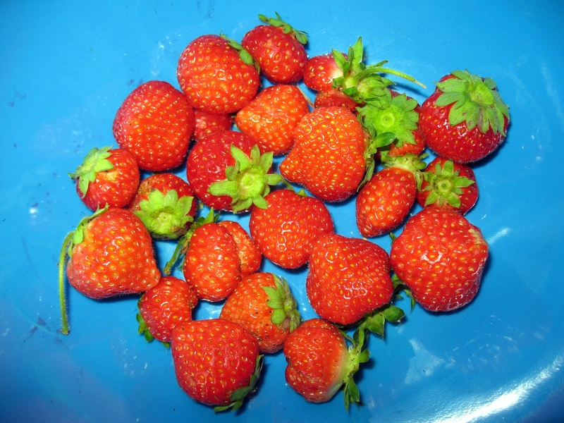 Question About Strawberries Img_4633