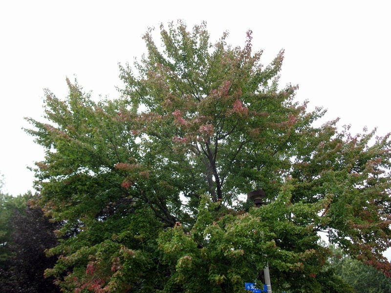 CANADIAN REGION: What are you doing in September 2017 Img_4717