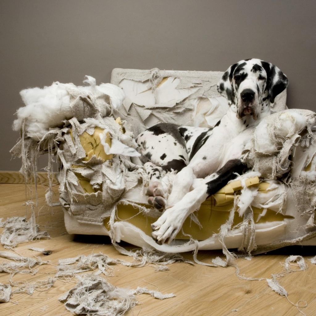 bétises de vos chiens , - Page 2 Fauteu10