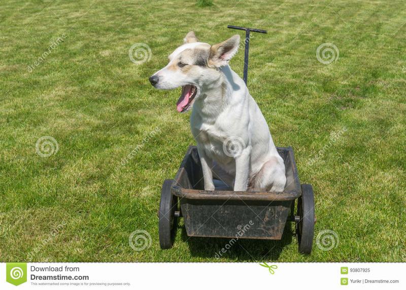 quel vehicule pour transporter vos chiens? - Page 11 Le-chi10