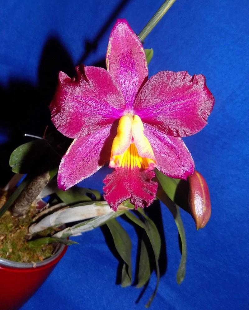 Floraison en vue  Dscn1513