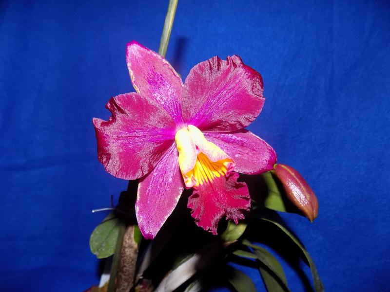 Floraison en vue  Dscn1514