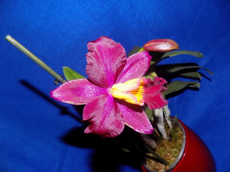 Floraison en vue  Dscn1515
