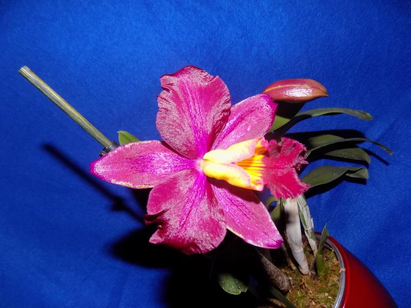 Floraison en vue  Dscn1516