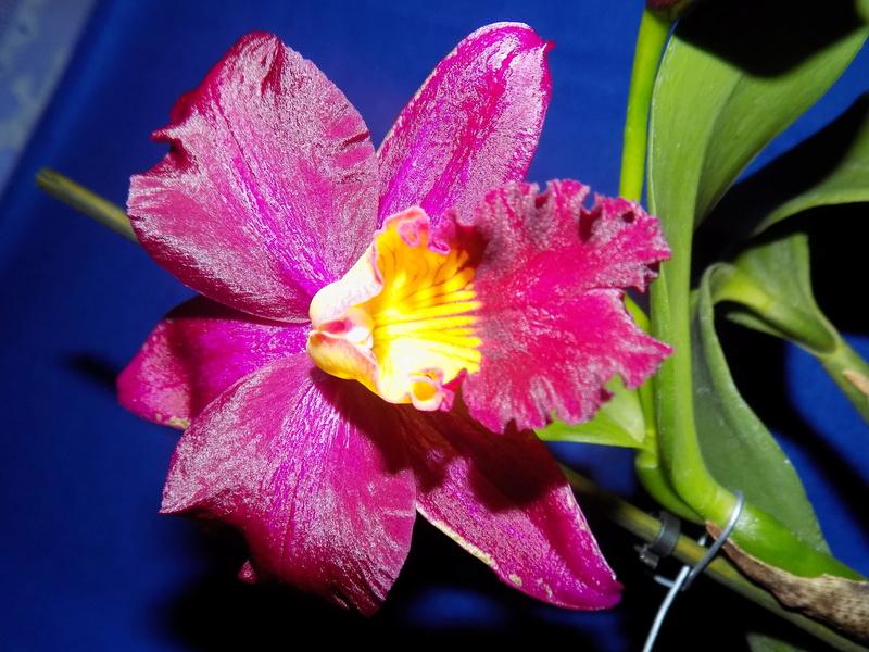Floraison en vue  Dscn1517