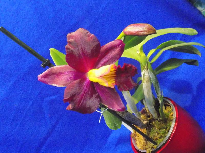 Floraison en vue  Dscn1518