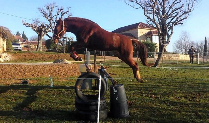 Estimation de nos chevaux ! - Page 6 15781110