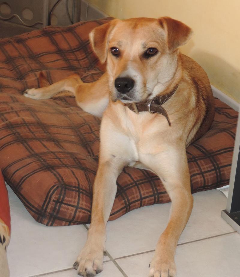 Le chien, meilleur ami de l'homme.... ! ? 25211
