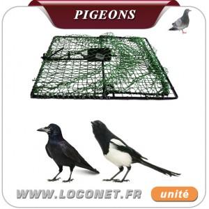 Pie  Piege-11