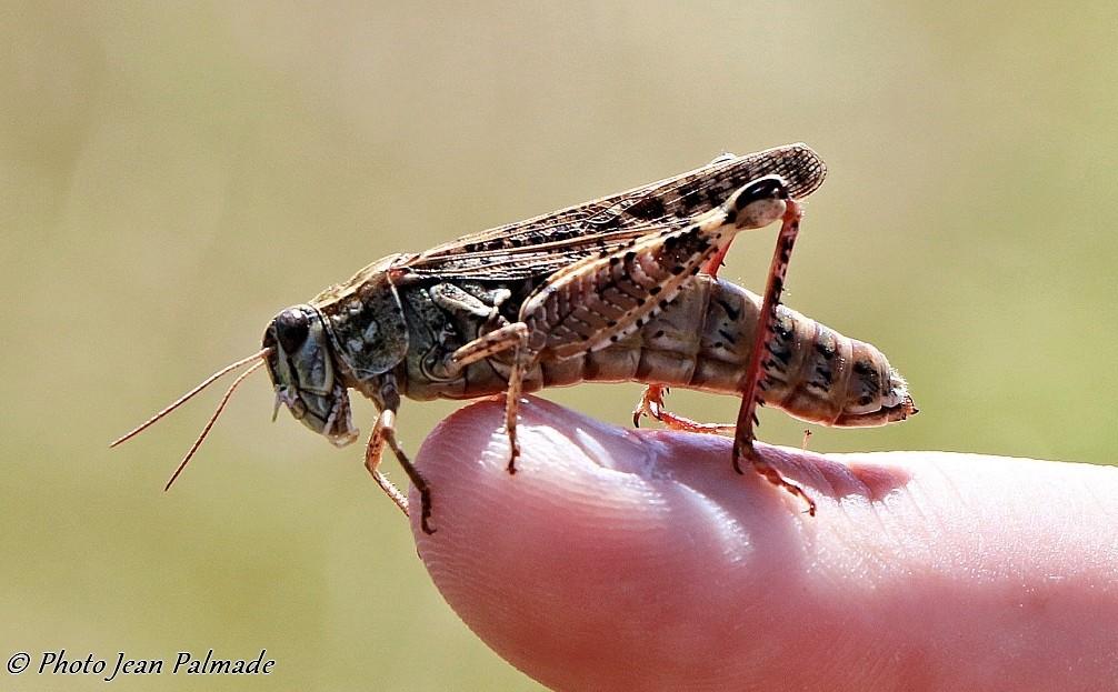 Jiminy Cricket  Img_3265