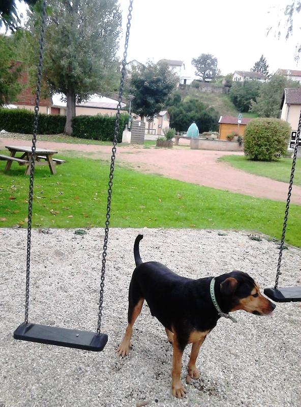 """dur dur d""""etre un chien  - Page 4 Dsc_1512"""