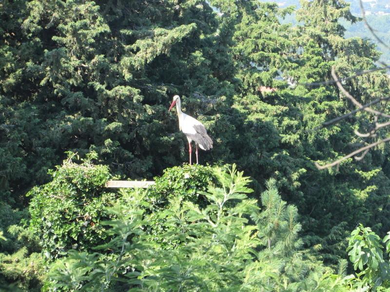 Besoin d'aide pour identifier cet oiseau. Img_2410