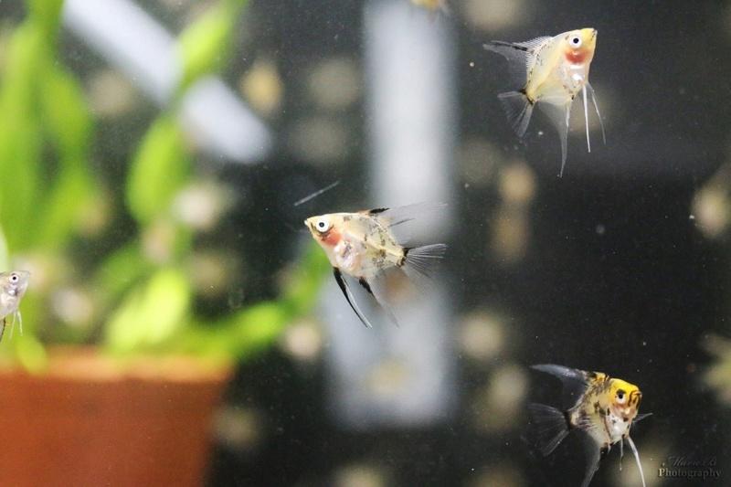 Reproduction Rio Nanays Thumbn10